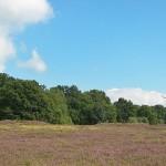 Hügelgräber bei Niederhaverbeck